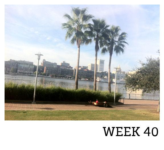 WEEK 40